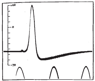 action_potential