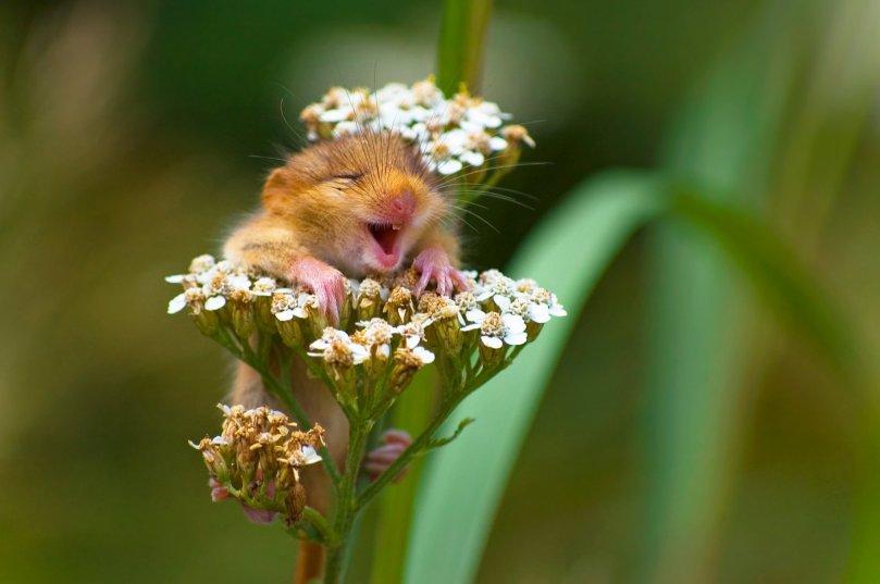Andrea Zampatti Comedy Wildlife Photo Awards