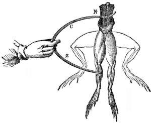 galvani-frogs-legs-electricity