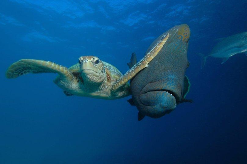 Troy Mayne Comedy Wildlife Photo Awards